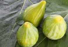 Figs on fig leaf. Some fresh figs on their leaf Royalty Free Stock Photo