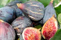Figs on fig leaf. Three Figs on fig leaf in the field Stock Image