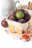Figs. Royalty Free Stock Photos