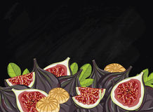 Figs fruit composition on chalkboard, vector. Figs on chalkboard background. Figs composition, plants and leaves. Organic food. Summer fruit. Fruit background Royalty Free Stock Image