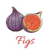 Figs fruits isolated botanical icon. Figs fruits. Isolated whole and cut fig. Fruit product emblem for juice or jam label, packaging sticker, grocery shop tag Royalty Free Stock Photography