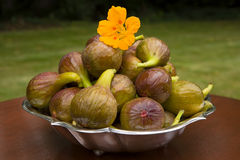 Figs in garden Stock Images