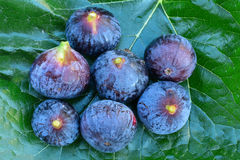 Figs and green leaf background Royalty Free Stock Image