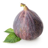 Figs with green leaf Royalty Free Stock Image