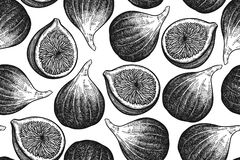 Seamless vector pattern with figs. Figs isolated on white background. Seamless pattern. Realistic fruits in the technique of vintage engraving. Black and white Royalty Free Stock Photo