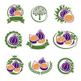 Figs labels and elements set. Vector. Illustration Royalty Free Stock Photo