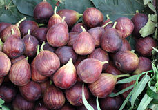 Figs. A pile of fresh purple figs Royalty Free Stock Photos