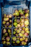 Figs in plastic crates. On market for sale Stock Photo