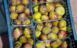 Figs in plastic crates. On market for sale Stock Photography