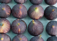 Figs on Plate. White ceramic plate holds four rows of fresh figs Stock Image