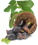Figs scattered from a wicker basket Royalty Free Stock Photography