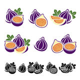 Figs set. Vector Stock Image