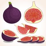 Figs. Vector illustration. Vector figs isolated on white background. Whole, half and sliced figs. Illustration Royalty Free Stock Photography
