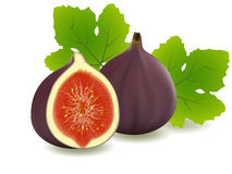 Figs. Vector illustration . Figs on white background Royalty Free Stock Image