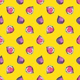Figs. Tropical pattern of exotic fruit. Watercolor Seamless background. Figs. Watercolor hand painted illustration with exotic fruits. Seamless background Stock Images