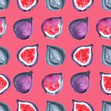 Figs. Tropical pattern of exotic fruit. Watercolor Seamless background. Figs. Watercolor hand painted illustration with exotic fruits. Seamless background Royalty Free Stock Images