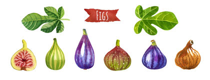 Figs, watercolor illustration,  clipping paths included Stock Images