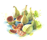 Figs watercolor illustration  on white background. Figs watercolor illustration  on white Royalty Free Stock Photography