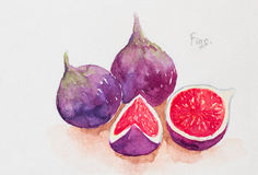 Figs watercolor painted Royalty Free Stock Photos