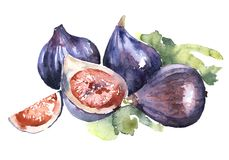 Purple figs fruits on a white background with part. Figs watercolor  purple blue beautiful fig fruit juicy exotic Stock Images