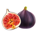 Figs on white background. Figs isolated realistic illustration on white background Stock Images