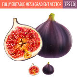 Figs on white background. Vector illustration. Figs isolated realistic illustration on white background Stock Photo