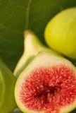 Figue fraîche Photo stock