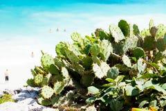 Figues de Barbarie sur la plage photos libres de droits