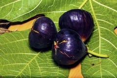 Figues douces mûres avec les feuilles vertes Figues méditerranéennes saines de figue Photo stock