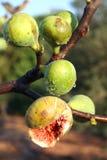 Figues fraîches sur trois Photographie stock