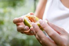 Figues organiques fraîches de l'arbre Photo libre de droits