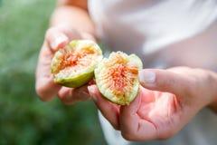 Figues organiques fraîches divisées de l'arbre Photographie stock libre de droits
