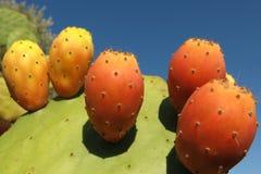 Figuier de barbarie avec le fruit mûr Photo libre de droits