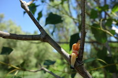 Figura che riposa su un ramo, pensante Fotografia Stock Libera da Diritti