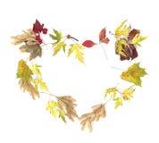Figura del cuore fatta dei fogli variopinti di autunno Fotografie Stock