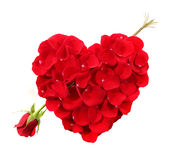 Figura del cuore fatta dei petali di Rosa con lungamente staccato immagini stock libere da diritti
