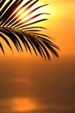 Figura delle palme Immagini Stock