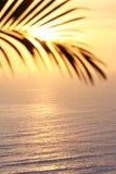 Figura delle palme Fotografia Stock Libera da Diritti