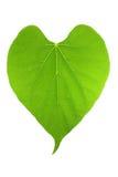 Figura di foglio verde del cuore Immagine Stock Libera da Diritti