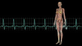 figura e eletrocardiograma fêmeas de configuração ilustração do vetor
