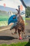 Figura extraña baile del pájaro Imagenes de archivo