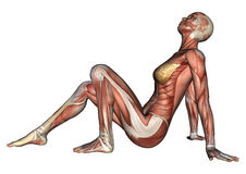 Figura fêmea da anatomia ilustração royalty free