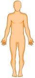 Figura humana de la anatomía imagen de archivo