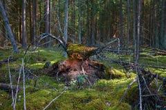 Figura mística de la bestia en bosque con el relámpago intersting del lado fotos de archivo