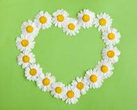 Corazón de la manzanilla en verde Imagen de archivo