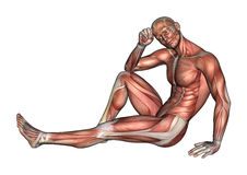 Figura maschio di anatomia illustrazione di stock