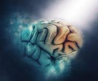 figura medica 3D di un cervello con il lobo frontale evidenziato Fotografia Stock Libera da Diritti
