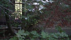 A figura misteriosa de um homem em um casaco preto passa por uma janela quebrada em uma fábrica arruinada video estoque