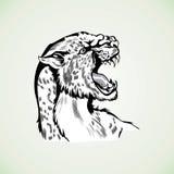Figura modelo agresivo salvaje de la pantera del tigre Imágenes de archivo libres de regalías