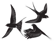 Andorinha do pássaro ilustração stock